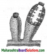 Maharashtra Board Class 10 Science Solutions Part 2 Chapter 6 Animal Classification 29