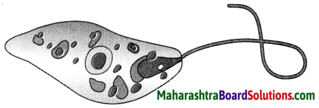 Maharashtra Board Class 8 Science Solutions Chapter 1 Living World and Classification of Microbes 9
