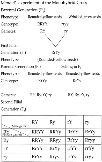 Maharashtra Board Class 9 Science Solutions Chapter 16 Heredity and Variation 4