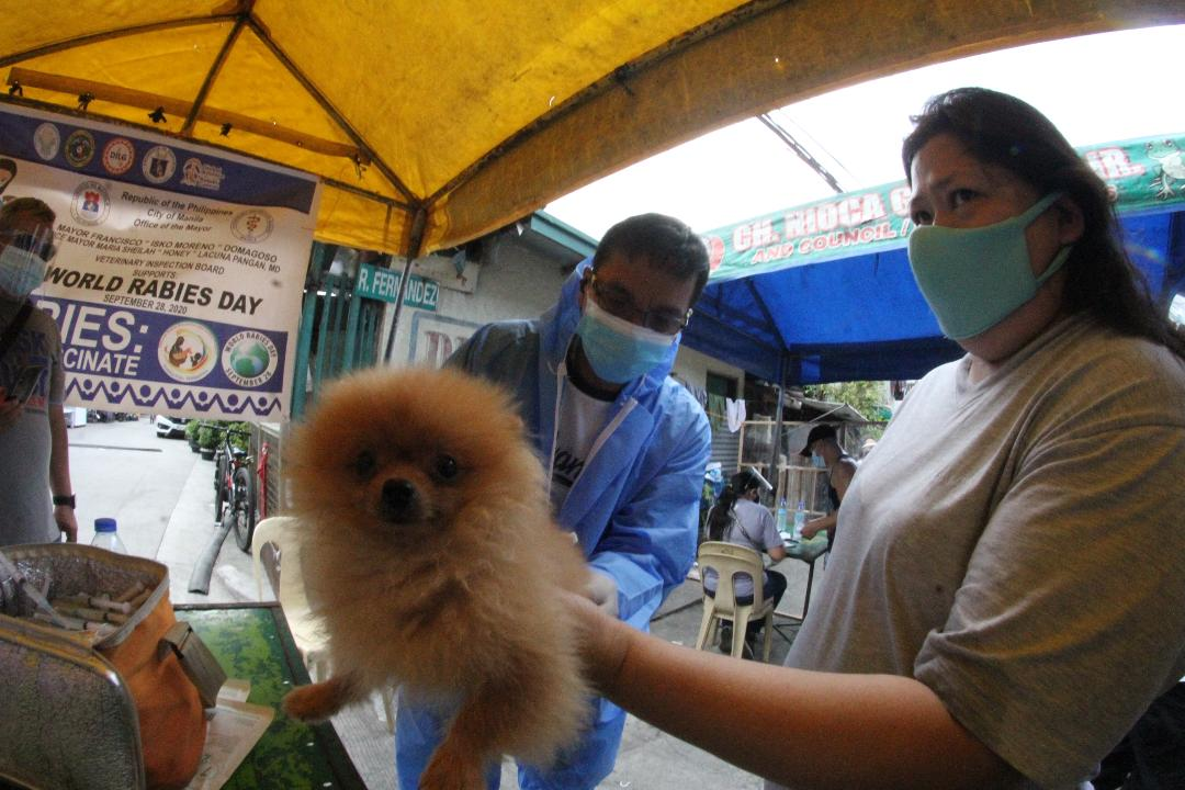 Free anti-rabies vaccines on World Rabies Day
