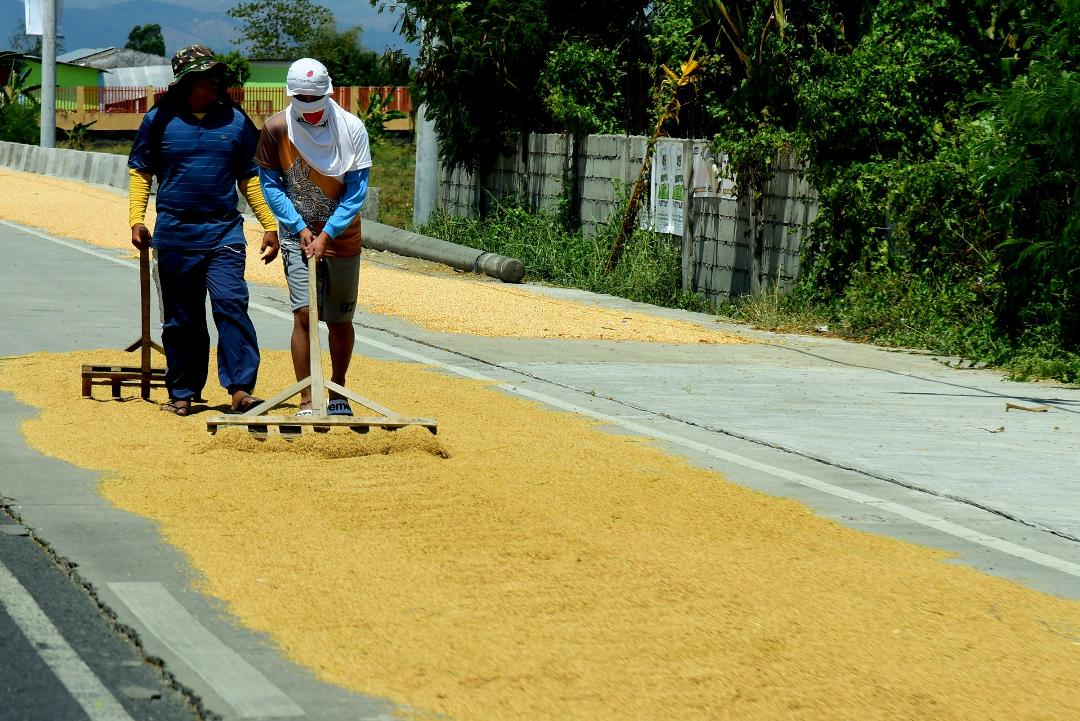 DA assures increased rice supply from wet season harvests
