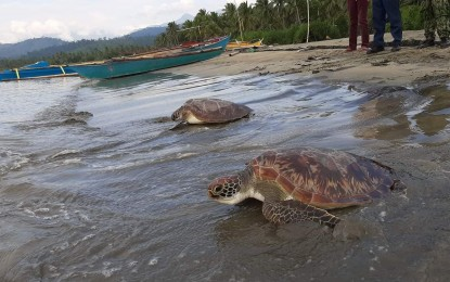 Wildlife conservation must continue even with pandemic: Cimatu