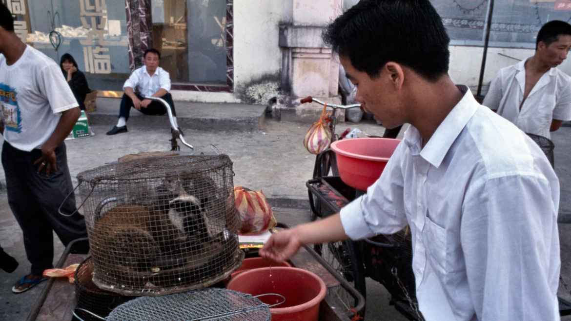 WHO advices ban on the sale of live animals