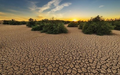 Climate change fuels need for community gene banks: expert