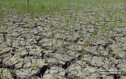 Palace renews call for world leaders to act on climate change