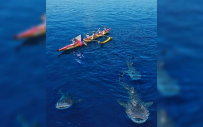 Whale sharks greet Cebu paddlers in 5-day expedition