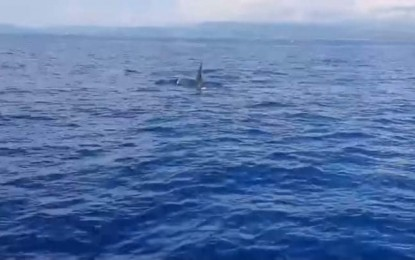 Killer whales spotted on coast of Libertad, Antique