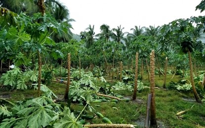 Strong winds damage houses, crops in SoCot town