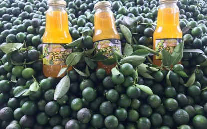 Calamansi concentrate boosts income of Pangasinan family