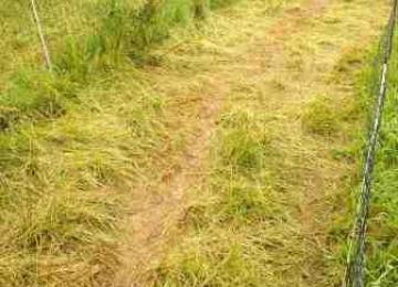 humble like grass