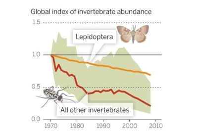 According to global monitoring data for 452 species, there has been a 45 percent decline in invertebrate populations over the past 40 years. Dirzo, Science (2014)