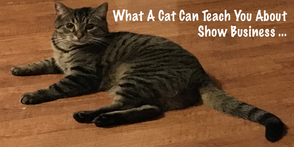 What A Cat Can Teach You About Show Business (Part 1)