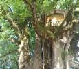 Hotell högt upp i trädet, går bra att hyra