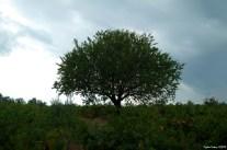 Vineyard - Bağ