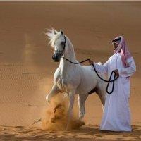 Kempen Membela Kuda