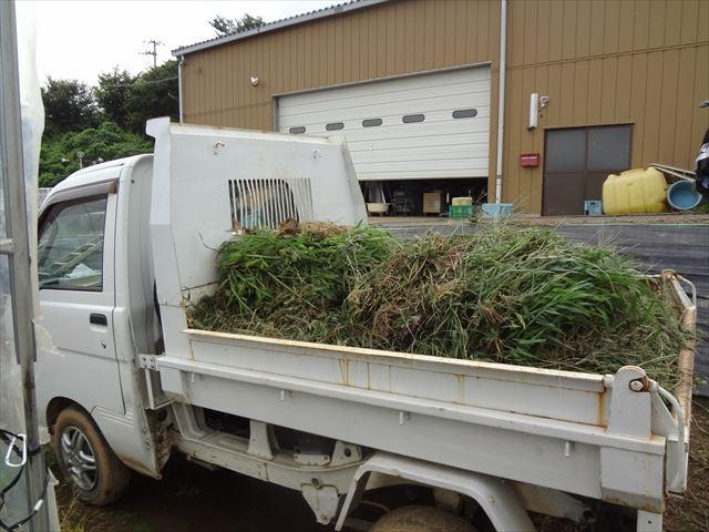 車に積んだ雑草