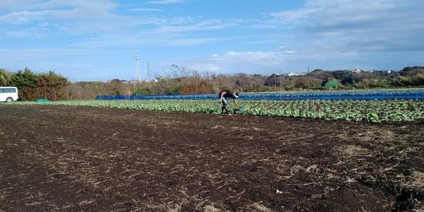 2018年10月27日 福姫会【渡邉農園】援農ボランティアin神奈川県三浦市