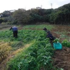 2018年12月08日 福姫会【渡邉農園】援農ボランティア