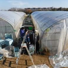 2019年01月19日【渡邉農園】援農ボランティア