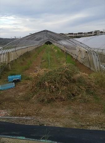 2019年09月28日 【渡邉農園】援農ボランティア