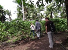 Weaving our way through the coffee plants