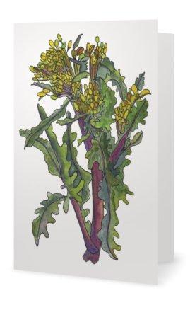 Kale: Brassica napus pabularia