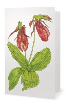Pink Lady Slipper: Cypripedium acaule