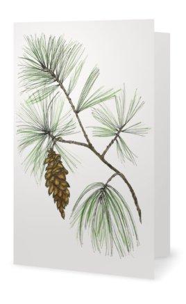 White Pine: Pinus strobus