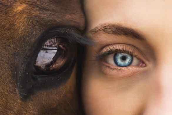 soul medicine: horse