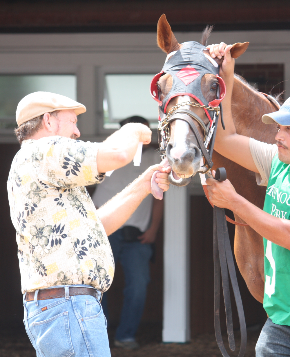A handler ties the tongue of #5 Jay's Wish before the second race at Monmouth Park on Aug. 22.