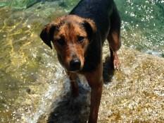 Sicilia Dog Friendly