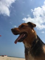 Spiagge dog friendly