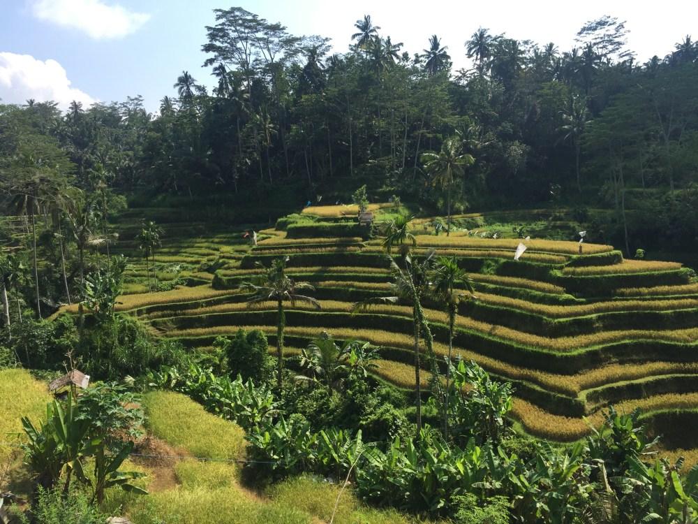 ubud risaie - cosa fare a Bali - Indonesia