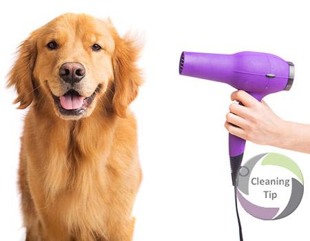 How to Groom Pets -pet grooming