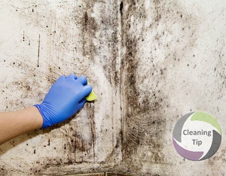 How to Remove Mold from Walls. mold removal