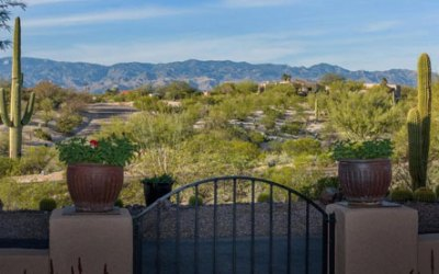 The Zen of Clean: Palo Verde Tucson