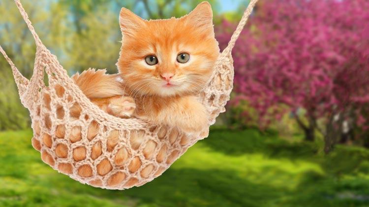 Hammock Day Encourages Relaxation for pets