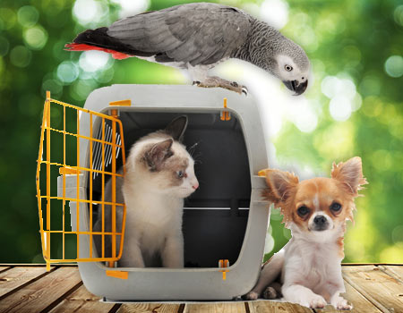 How to Clean a Pet Cage