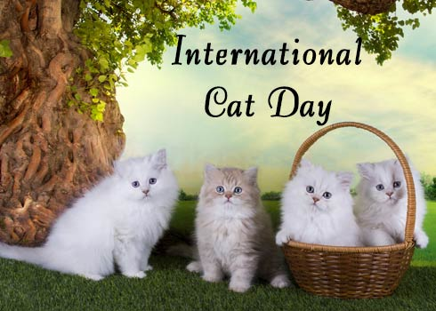 Celebrating and Cleaning on International Cat Day