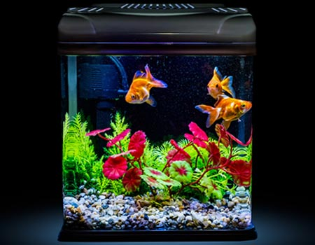 Safe Aquarium Cleaning—Making Swim Easy