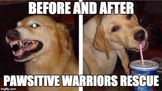 meme paws before after
