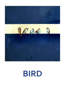 bird-cover-front