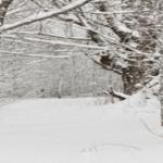 Snowy Woods. Karie.Friedman.