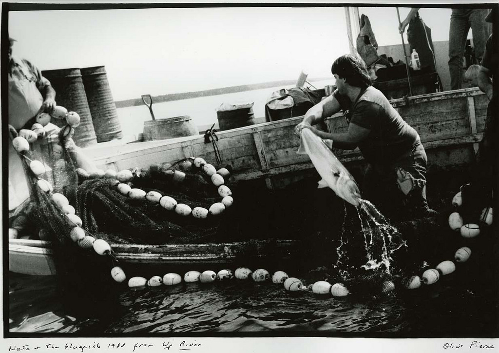 Olive Pierce, Nate and the Bluefish (Up River series),1988