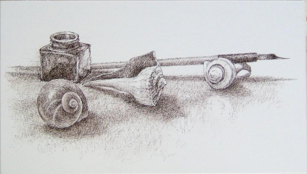 Mallow, <i>Three Shells, Pen and Ink</i>
