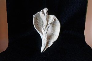 James McCarthy, <i>Weathered Shell</i>