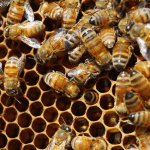 Getting Started with Beekeeping