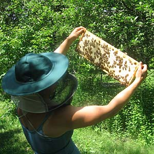 Harvest honey at the end of July or when the honey flow slows.