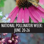 Promoting Pollinators to Our Local Communities