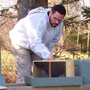 Spraying a Package of Bees with Sugar Water